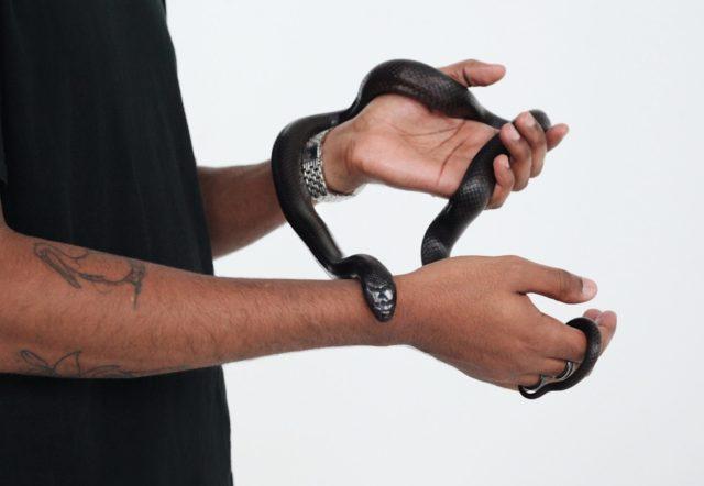 Symbolfoto zum Thema Mut: tätowierter Mann mit Schlange in den Händen